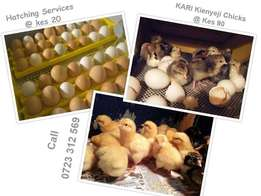 Egg Hatching (Incubator) Services