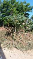 MIRAMAR PROPERTY SOLUTIONS..4 plots for sale in mtwapa touching tarmac