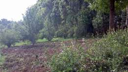 Great Deal. Get 100x100 and 50x100 plots in Ngarariga Limuru at 2.3 M