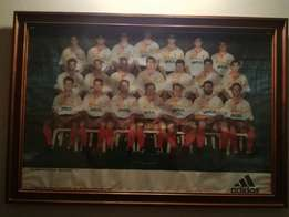 1994 Cheetahs team photo framed