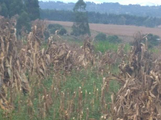 Land for sale in Kitale Robert Ouko - image 3