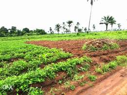 A very fertile farmland in Ogun state