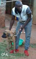 Dog trainer( obedience protection training, aggression)