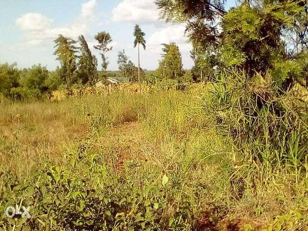 Juja 100x100 1/4 acre plots for sale Ruiru - image 2