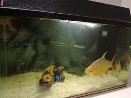 Final week for this offer - R500 all inclusive fish tank
