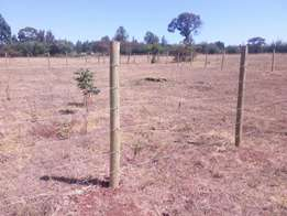 Plots for sale at Kipkenyo ( Tuiyo Bei)