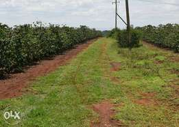 Ruiru ridges 1/4 acre at 4.45M, 1/8 acre at 2.25M by Urithi.