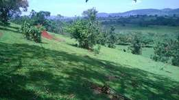 10 acres of Titled land for sale in Mukunyu, Kyenjojo, Uganda
