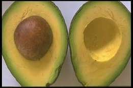 avocado, Shea Nut,Red Beans, seeds and vergitable supplier ready