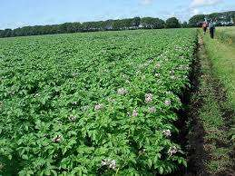 Agricultural land for sale_Engineer in Kinagop