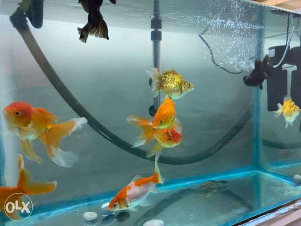 Aquarium with fishes, heater, motor filter and Canisterfilter