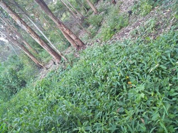 Land in Matasya Ngong, 8 Acres for sale Parklands - image 7