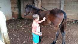 Beautiful young mare for sale