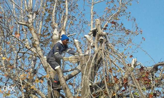 tree fellings and site clearing Bethal - image 1