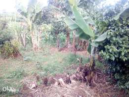 A super prime 42*84 plot at Muthiga for lease