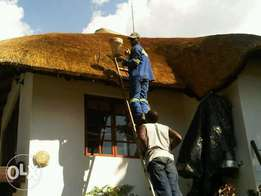 spaying of Grass roofs