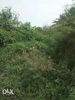 A plot of land for sell