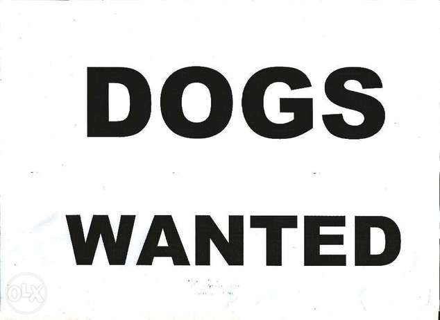Adult Dogs , GSD, Ridgeback,Boerbel, labrador or Cross breeds wanted. Ikeja Government Reserved Area - image 1
