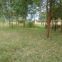 50 by 100 plot in Bungoma