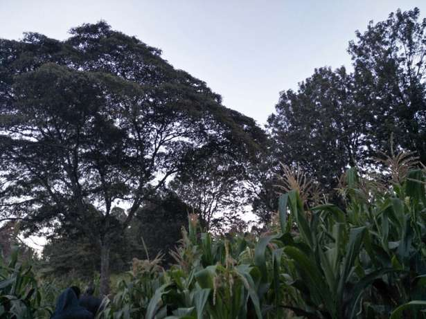 Land in Matasya Ngong, 8 Acres for sale Parklands - image 8