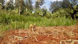 1/5 acre in karatina for sale