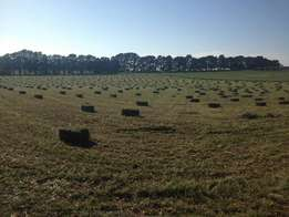New season second cut lucerne hay available