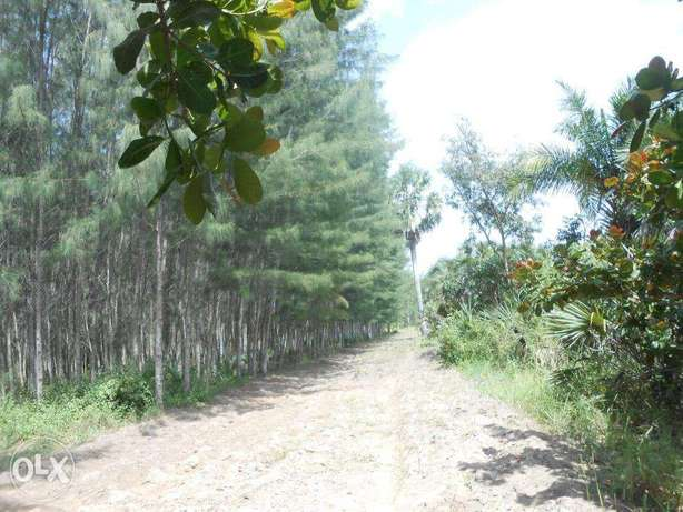 11 acres with casuarinas trees,msambweni Kwale - image 2