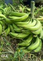 Large Plantain bunches for sale