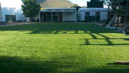 Top Quality Instant Lawn- Kikuyu, LM & Evergreen Lawn