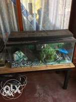 Large 3 foot fish tank with heater and pump and extras