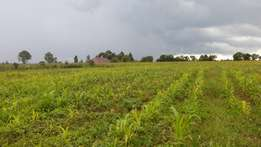 1/4 Plots at ILLULA Eldoret