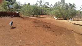 Poultry farm for lease