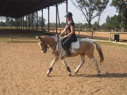 Show Jumping Pony for sale