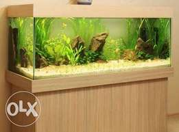Aquarium for interior design