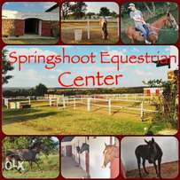 Lovely stables available in Boschkop area
