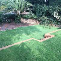 High quality instant lawn per m2 delivered and installed!