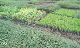 Motherland Tree Nursery