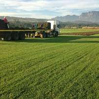 Exceptional quality instant lawn,delivery, terrain prep & Installation
