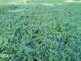 Roll-on lawn and weed free composts at low prices