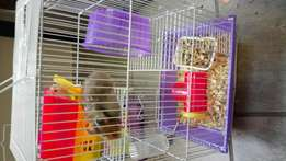 3 Storey hamster cage with two hamsters