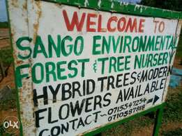 Gardening &landscaping,Sales of ornamentals ,modern flowers ,Forestry