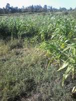 40*80 plot at mathanje,kandara near Kenol town.1km from nai-nyeri H