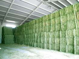 alfalfa feed for animals available now .