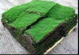 carpet grass, gardenscape products and services