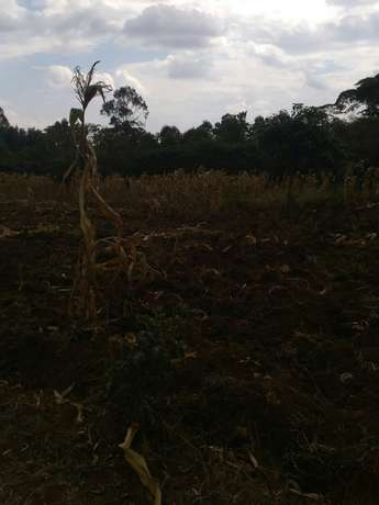Land for sale Thogoto - image 3