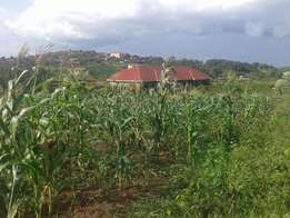 A gorgeaus plot of land (50x100ft) on sale in namugongo-sonde at 48m