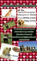 Dog training /animal behaviourist