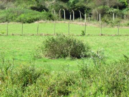 Prime ½ Acre Land For Sale In Karen Karen - image 4