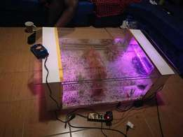 White coffee table aquarium 15k