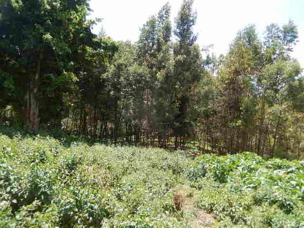 Tigoni 2 Acres Near Birthday Road Nairobi CBD - image 5